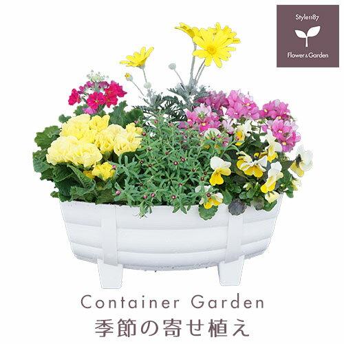 【送料無料】季節の寄せ植え 冬 タル型鉢 白 ★ ギフトにも最適な季節のお花を寄せ植えに♪ 【プレゼント ブリキピック 玄関 ベランダ】