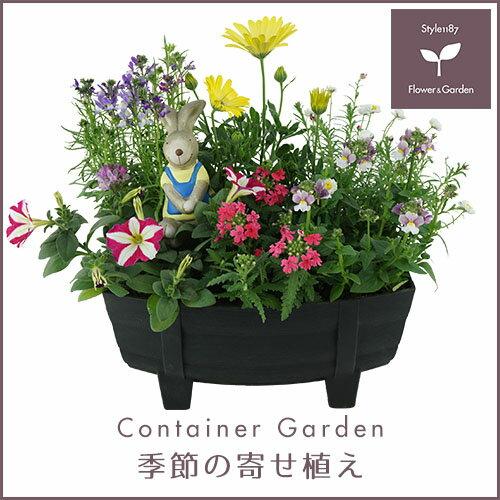 【送料無料】季節の寄せ植え「春」タル型鉢 黒 ★ ギフトにも最適な季節のお花を寄せ植えに♪【プレゼント ブリキピック 玄関 ベランダ】