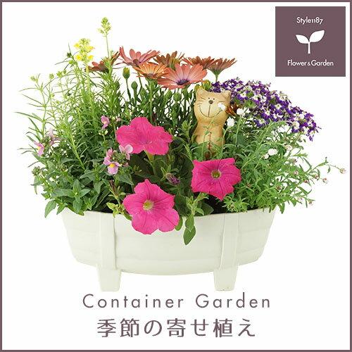 【送料無料】季節の寄せ植え「春」タル型鉢 白 ★ ギフトにも最適な季節のお花を寄せ植えに♪ 【プレゼント ブリキピック 玄関 ベランダ】