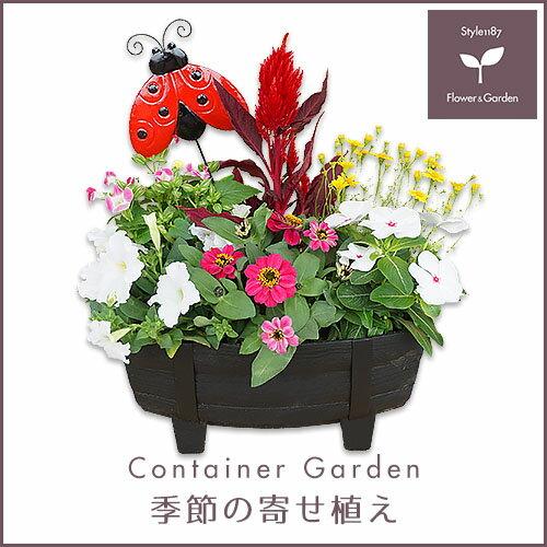 【送料無料】季節の寄せ植え「春・夏」タル型鉢 黒 ★ ギフトにも最適な季節のお花を寄せ植えに♪【プレゼント ブリキピック 玄関 ベランダ】