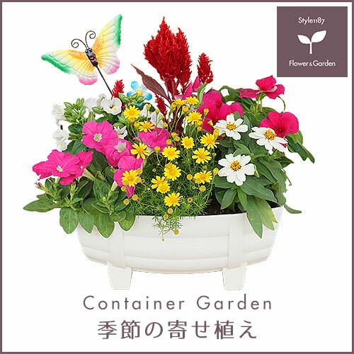 【送料無料】季節の寄せ植え「春・夏」タル型鉢 白 ★ ギフトにも最適な季節のお花を寄せ植えに♪ 【プレゼント ブリキピック 玄関 ベランダ】