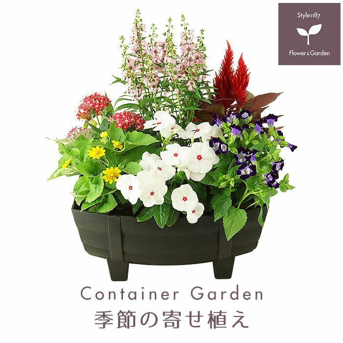 季節の寄せ植え 夏 タル型鉢 黒 ★ ギフトにも最適な季節のお花を寄せ植えに♪【プレゼント ガーデンピック 玄関 ベランダ 送料無料 沖縄・離島を除く】