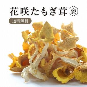 【送料無料】 乾燥 花咲たもぎ茸 15g 【姿】 熊本産 黄金きのこ タモギ茸