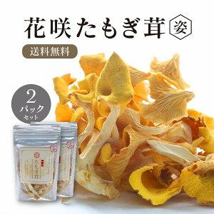 【2パック】【送料無料】 乾燥 花咲たもぎ茸 15g×2個セット 【姿】 熊本産 黄金きのこ タモギ茸