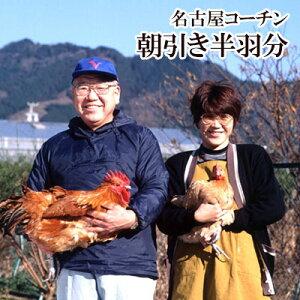 名古屋コーチン 本物の地鶏![ ハーフ ]もも・むね・ささみ各1枚セット 新鮮 鶏肉 国産 名古屋コーチン
