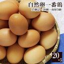 自然卵一番鶏「25個詰」(20個+破損保障分5個)[千葉県産][香取市小見川の地卵]※【 冷蔵 限定配送 】※冷凍限定…