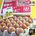 放し飼い 自然卵 一番鶏 「50個詰」(40個+破損保障分10個) 鶏卵 お取り寄せグルメ 千葉県産 香取市 小見川の地卵 庭…