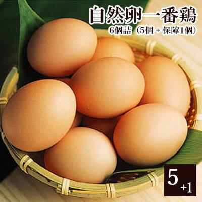 放し飼い 自然卵 一番鶏 「6個詰」(5個+破損保障分1個) [ 鶏卵 千葉県産 香取市 小見川の地卵 庭先たまご タマゴ 卵 玉子 ]※【 冷蔵 限定配送 】※冷凍限定商品とは同梱できません 別途送料がかかります