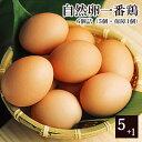 放し飼い 自然卵 一番鶏 「6個詰」(5個+破損保障分1個) [ 鶏卵 千葉県産 香取市 小見川の地卵 庭先たまご タマゴ …