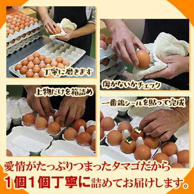 放し飼い自然卵一番鶏「50個詰」(40個+破損保障分10個)[鶏卵千葉県産香取市小見川の地卵庭先たまごタマゴ卵玉子]※【冷蔵限定配送】※冷凍限定商品とは同梱できません別途送料がかかります