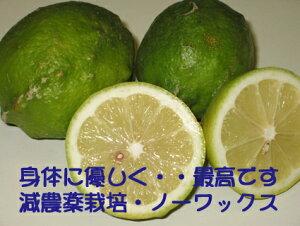 大三島産【ブスグリーンレモン1Kg】