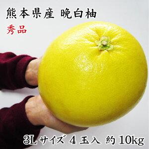 フルーツ お歳暮 ギフト 熊本県八代特産 晩白柚(ぱんぺいゆ) 秀品 4玉 3Lサイズ 10kg(1玉約2.5kg) (12月中旬頃より発送)