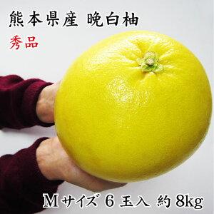 フルーツ お歳暮 ギフト 熊本県八代特産 晩白柚(ぱんぺいゆ) 秀品 6玉 Mサイズ 8kg(1玉約1.3kg) (12月中旬頃より発送)