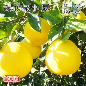 送料無料 みかん フルーツ 高知県産 小夏 2L〜3Lサイズ 約5kg 訳あり 家庭用 ニューサマーオレンジ 日向夏