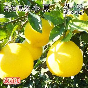 送料無料 みかん フルーツ 高知県産 小夏 2L〜3Lサイズ 約2.5kg 訳あり 家庭用 ニューサマーオレンジ 日向夏