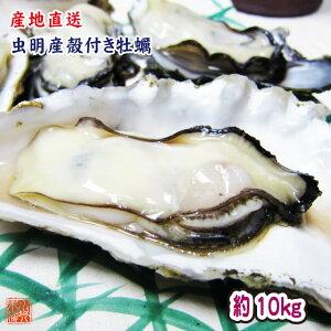 ギフト 牡蠣 生牡蠣 瀬戸内市邑久町虫明産 殻付き牡蠣 一斗缶 たっぷり10kg 約120個 産地直送 送料無料 カキ かき