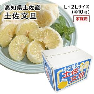 【2月上旬より発送】高知県産 土佐文旦 訳あり わけあり 家庭用 L〜2Lサイズ 約10kg みかん フルーツ