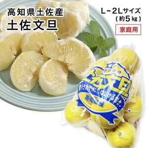 【2月上旬より発送】高知県産 土佐文旦 訳あり わけあり 家庭用 L〜2Lサイズ 約5kg みかん フルーツ