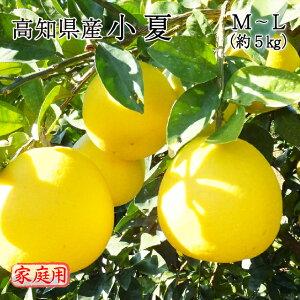 送料無料 みかん フルーツ 高知県産 小夏 M〜Lサイズ 約5kg 訳あり 家庭用 ニューサマーオレンジ 日向夏