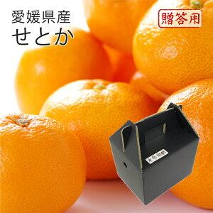 (3月上旬より順次発送) 送料無料 フルーツ ギフト 愛媛県産 せとか 赤秀 5〜9玉 L〜3L 約1.5kg 化粧箱入り