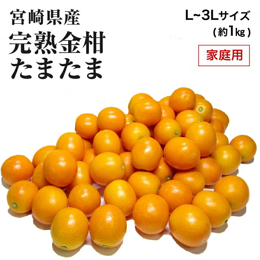【2月上旬より発送】宮崎県産 完熟きんかん「たまたま」 家庭用 L〜3L サイズ混合 約1kg