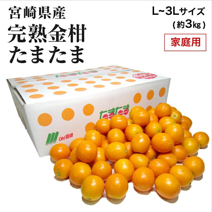 【2月上旬より発送】宮崎県産 完熟きんかん「たまたま」 家庭用 L〜3L サイズ混合 約3kg