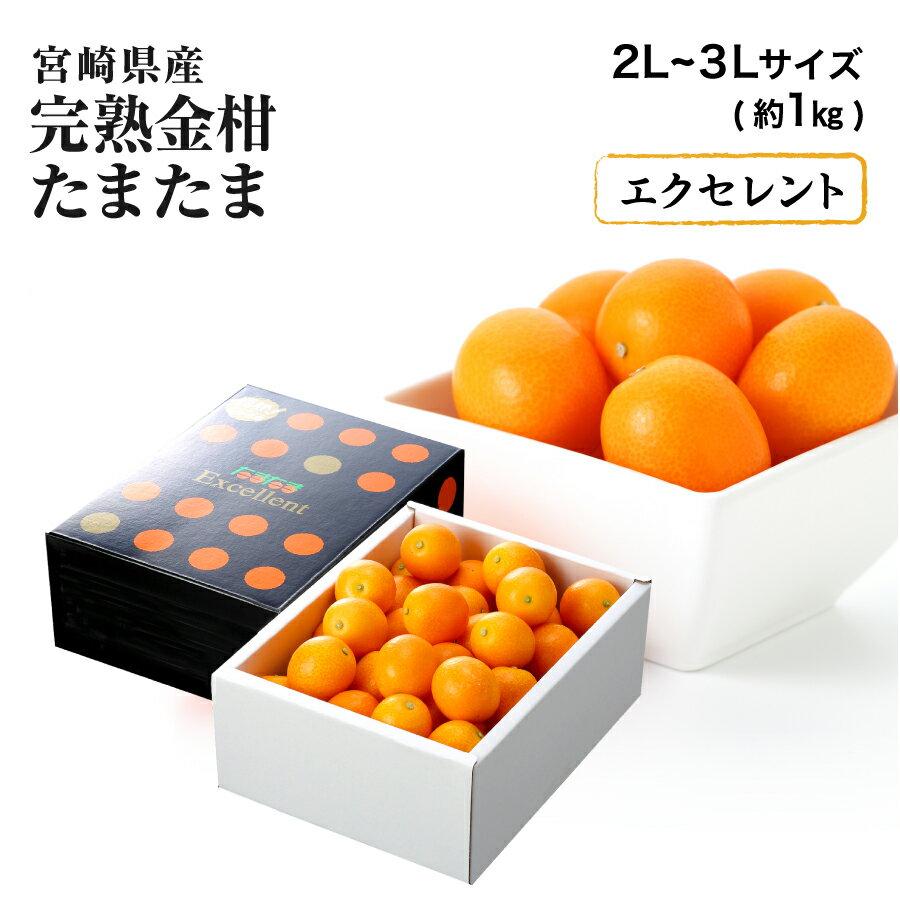 【2月上旬より発送】宮崎県産 完熟きんかん「たまたまエクセレント」 糖度18度以上 2L〜3L 約1kg