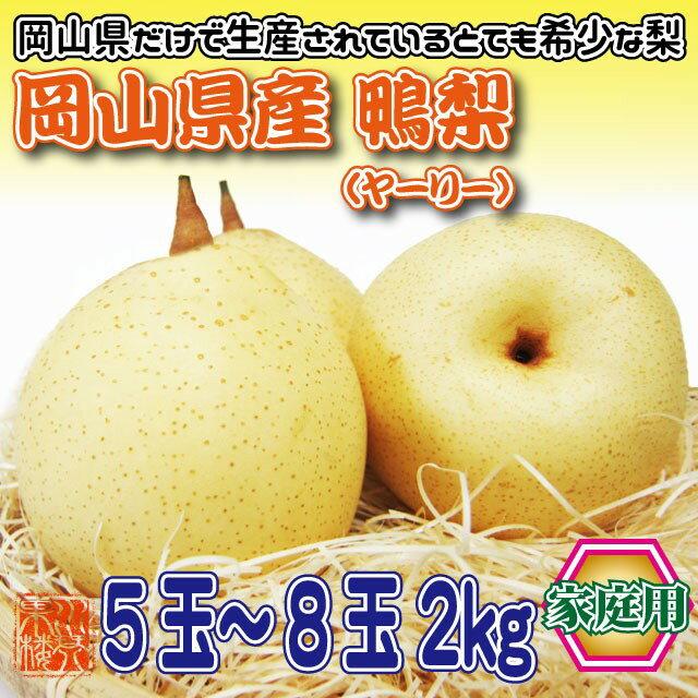 【送料無料】お歳暮 ギフト フルーツ 梨 岡山県産 鴨梨(ヤーリー) 家庭用 5〜8玉 約2kg 果物 くだもの ご当地 お取り寄せ