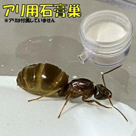 【日本から発送】石膏巣 アリの巣 蟻飼育用 あり アリ 蟻 給水可能 女王 小規模 ミニサイズ 飼育 観察 アリ部