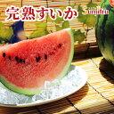 長野県産 すいか スイカ 2L むぎわらぼうし 産地直送 完熟 西瓜 果物 くだもの フルーツ プレゼント 長野県 果実 予約…