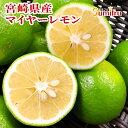 宮崎県産 レモン 5kg マイヤーレモン メイヤーレモン 国産レモン 減農薬 ノーワックス 防カビ剤不使用 果物 フルーツ …