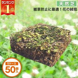 芝生 天然芝 花マット リピア ヒメイワダレソウ ピース 1ケース50個入 送料無料 (芝生 通販)