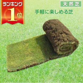 芝生 天然芝 高麗芝(コウライ芝) ロール巻芝 送料無料 (芝生 通販)