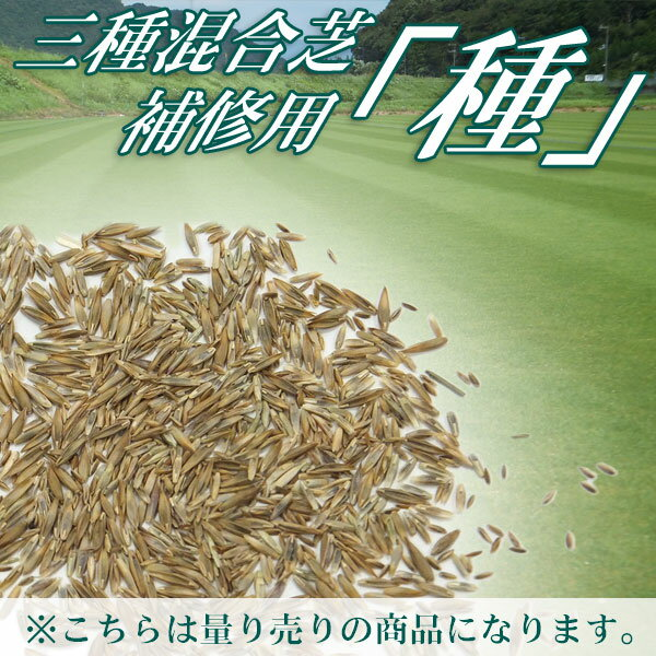 三種混合芝 補修用 種