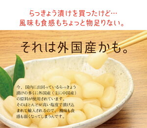 国産九州産宮崎県産らっきょう甘酢漬けらっきょう漬けメール便ポスト投函無添加