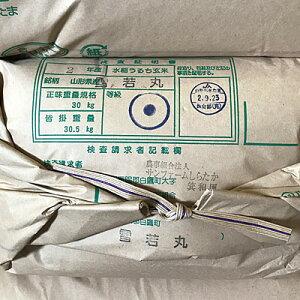 【新米】【雪若丸】【農家直送】【令和2年産】【山形の新品種】雪若丸玄米30kg!【10kgずつに小分け致します】