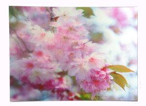 春カードサクラ 3DポストカードPN-1142EASE イーズプロダクツ