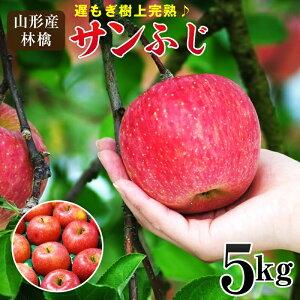 山形県産 遅もぎ収穫樹上完熟サンふじ林檎約5kg(12〜20玉前後)送料無料 林檎 リンゴ りんご、ふじ、フジ
