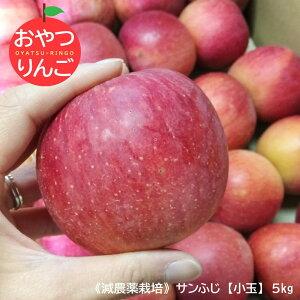 おやつりんご小玉5kg 信州小布施産 サンふじ林檎 小玉サイズ 送料無料 発送は12月20日頃まで。減農薬栽培、ご家庭用、サンふじ、ふじ、林檎、リンゴ、りんご、蜜