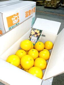 高知県産 小夏 こなつ 5kg 文旦好きの方にはぜひ 送料無料