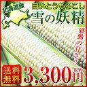 北海道産 とうもろこし 雪の妖精 約4kg(11〜15本) スイートコーン 送料無料 白いとうもろこし【8月下旬頃より順次出荷予定】