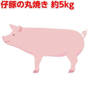 豚の丸焼き5kg(仔豚 子豚 子ぶた 仔ぶた 丸焼き まる焼き バーベキュー BBQ【送料無料】【業務用】