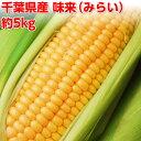 とうもろこし 数量限定!千葉県産 味来(みらい) 約5kg(11本〜15本)【送料無料】 朝採り トウモロコシ バーベキュ…