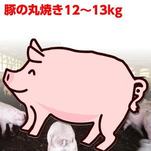 豚の丸焼き12〜13kg(仔豚 子豚 子ぶた 仔ぶた 丸焼き まる焼き バーベキュー BBQ【受注製造のためキャンセル不可】