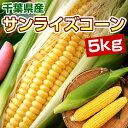 とうもろこし サンライズコーン 5kg 千葉県産 スイートコーン 送料無料 【8月初旬出荷開始予定】