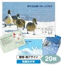 【送料無料】寒中見舞い 寒中お見舞い 20枚〔動物・鳥デザイン|私製はがき〕【印刷 作成 挨拶状 喪中 喪中はがき 喪中ハガキ】 後払…