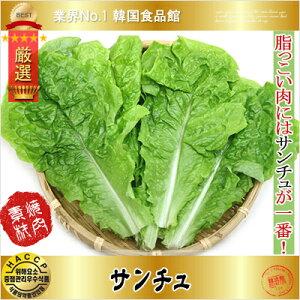 【韓国野菜】焼肉用野菜 サンチュ 100枚(10束)
