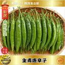 【韓国野菜|冷蔵】生青唐辛子 ◆辛口◆ 500g
