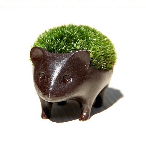 苔盆栽子はりねずみブロンズ製/アラハシラガゴケ