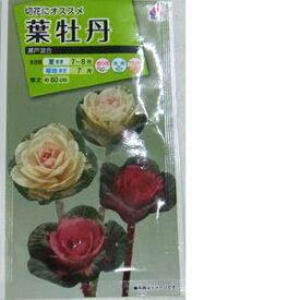 花種子 葉牡丹 (タキイ種苗) 瀬戸混合 0.5ml袋詰 【送料無料】